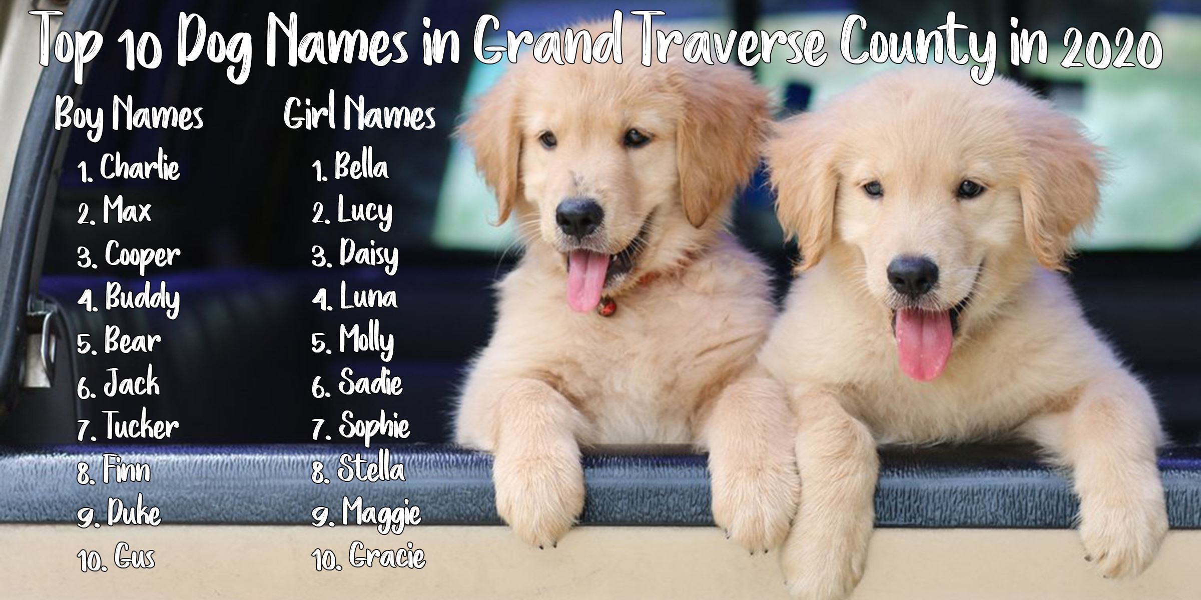 Top 10 Dog Names of 2020