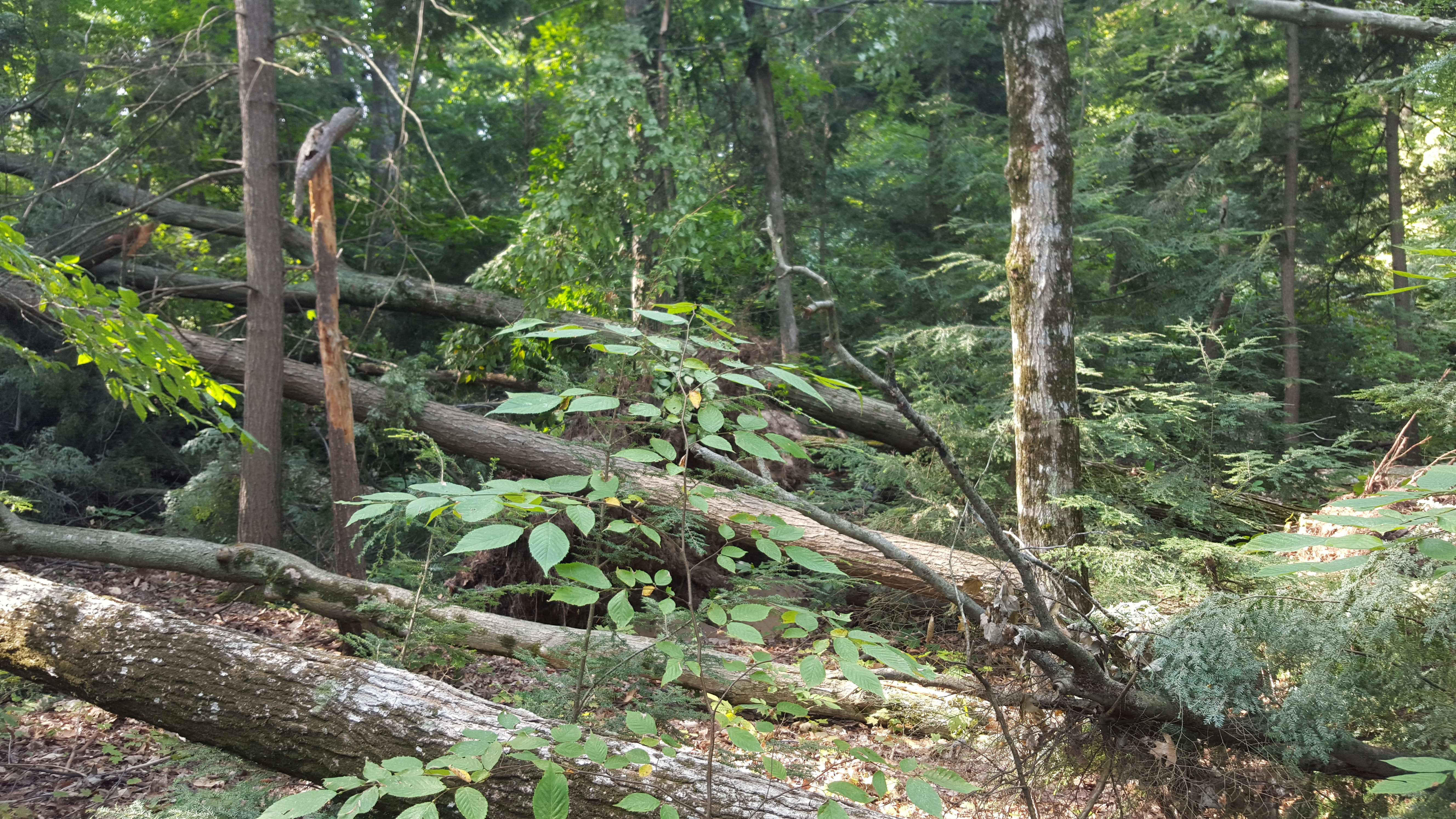 Storm Damage Woods